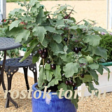 Баклажан (Solanum melongena F1) Pot Black, 3 шт семян