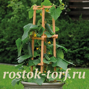 Огурец (Cucumis sativus ) Patio Snacker, 3 шт семян